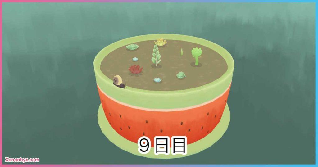 9日目の鉢